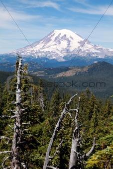 Mount Rainier with Trees