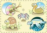 Reptiles and Spider Family