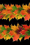 Autumn Leaf Abstract