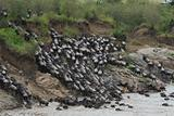 Great Migration in Kenya