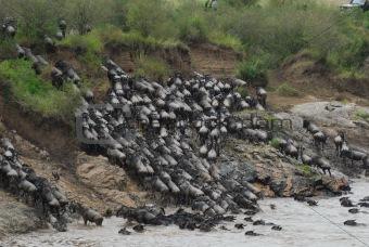 Great Migration in Kenya