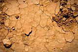 Cracked earth texture with plants