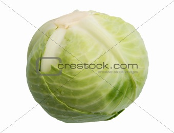 Single green cabbage with dew.