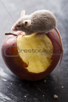 Red apple and mouse