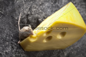 Little animal - mouse