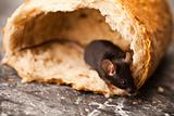 Rat in a bread