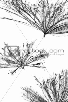 Abstract thistle seeds