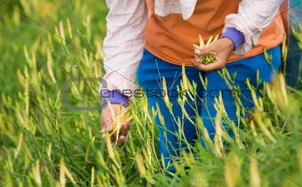 tiger lily farm with farmer working
