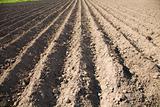 Plot of fallow land