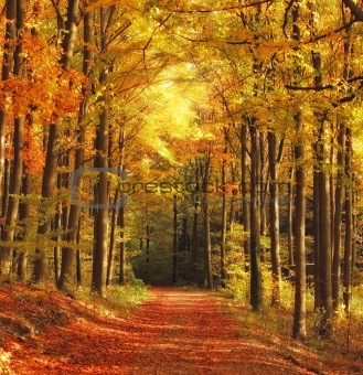 The forest in autumn - colorful