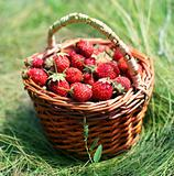 Strawberry in a basket on a grass.