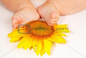 Baby's feet on sunflower