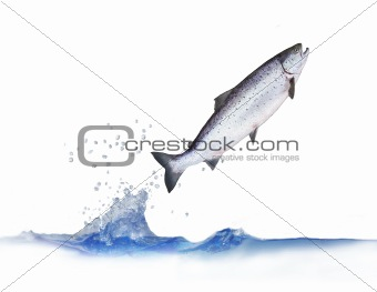 jumping out from water salmon