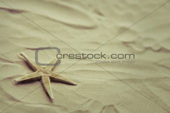 Small starfish on a beach