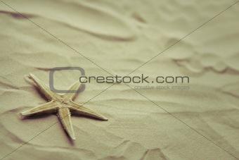 Small starfish on a beach