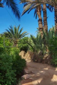 footpath in palm grove
