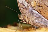 Butterflz detail