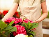 Mid section of young female florist at a greenhouse surrounded w