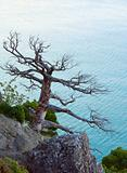 Tree and coast