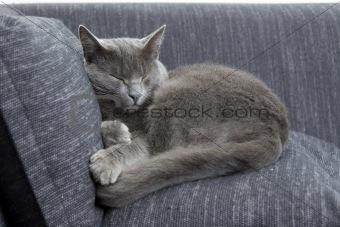 gray cat sleeping on a sofa