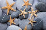 Starfish and Pebble Background