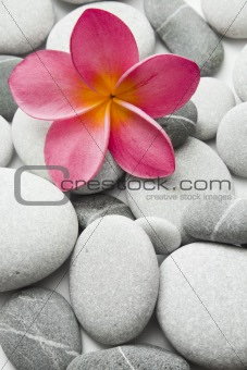 Attractive Pebbles and Flower
