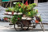 Wheelbarrow with Plants