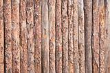 Rural primitive fence from pine logs