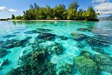 Underwater coral reef next to tropical island