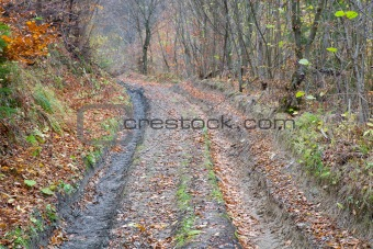 autumn mountain dirty road