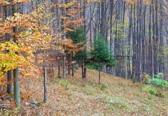 Autumn forest border