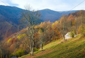 autumn mountain view