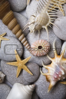 Attractive Pebbles and Seashells