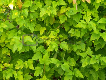 Green plant background and texture
