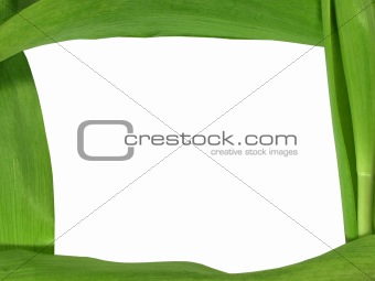 Green plant leaf frame, background