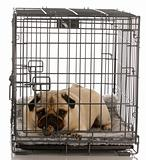 dog in a dog crate