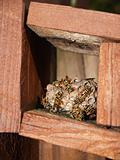 Wasps Working on Their Nest