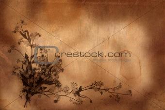 old herbarium background