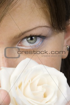close up white rose