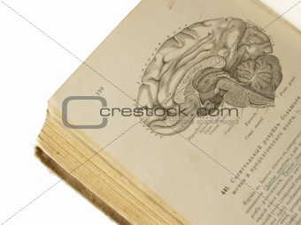 old anatomy book