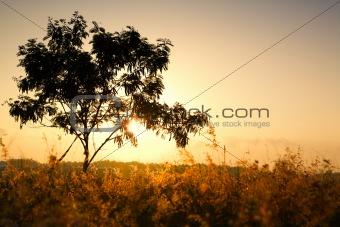 Single tree on morning summer sunlight