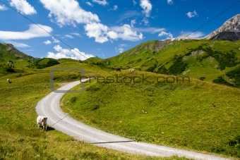 Alpine landscape and mountain road