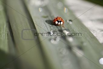 Small ladybug sitting on a green leaf