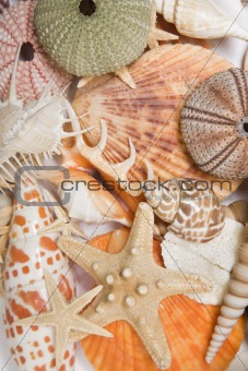 Seashells in High Key