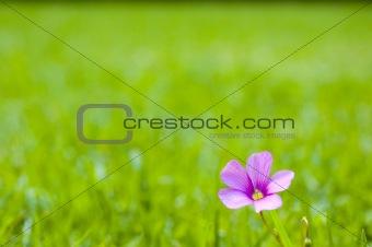 Single Pink Flower on Grass