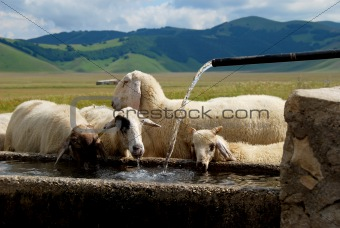 Watering place