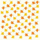 Color maple leaves