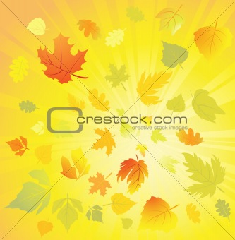Autumn leaves design elements, vector
