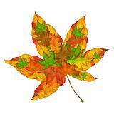 Maple Leaf Concept