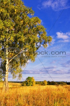 landscape with tree and blue sky